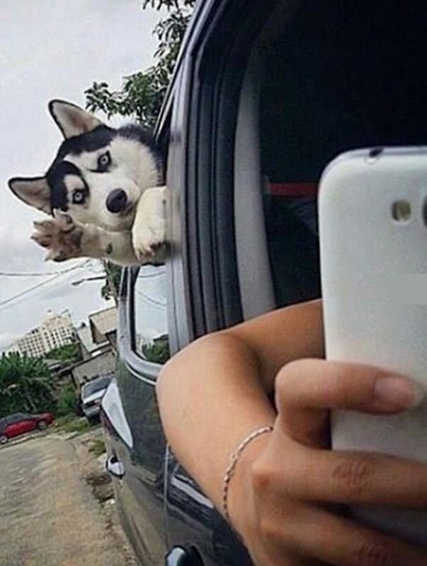 A xin chào, định chụp hình bố phải không?