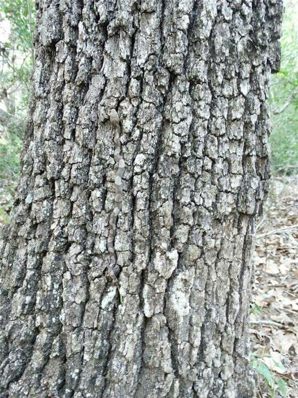 Có ai thấy cái cây này khác thường không? Nghe mùi nguy hiểm rình rập đâu đây.(Ảnh Internet)