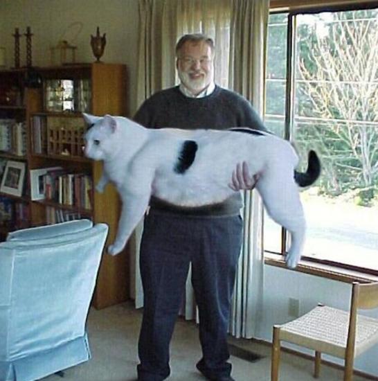 Này là giống heo chứ giống mèo gì...