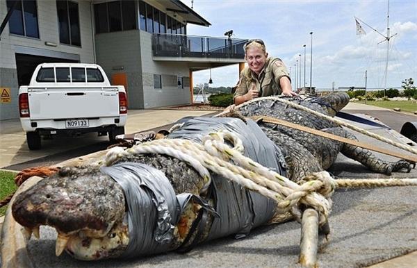 Có một qui luật bất thành văn ở Úc, đó là con gì nguy hiểm thì cũng to, chẳng hạn cá sấu.