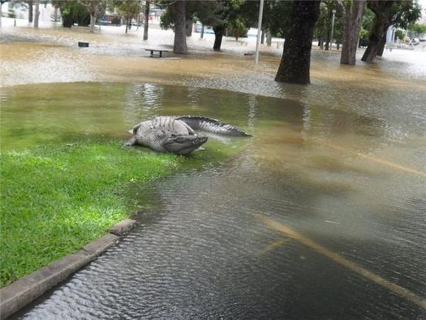 Hoặc trên các con phố ngập nước.