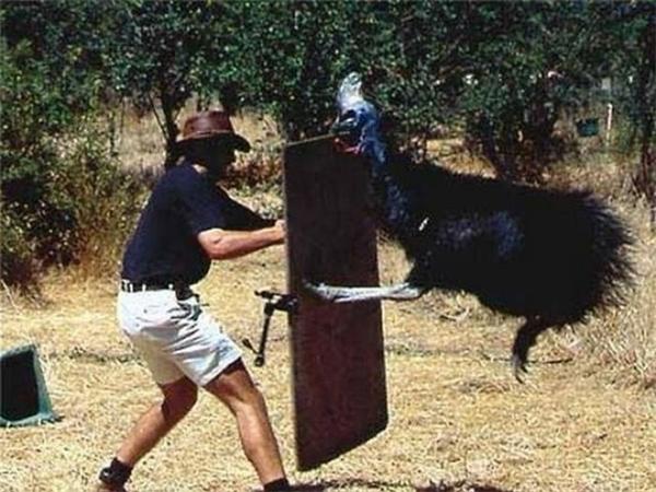 Khi bạn chọc giận một con đà điểu. Nên nhớ móng vuốt của nó có thể khiến cả một con ngựa lăn quay ra chết.
