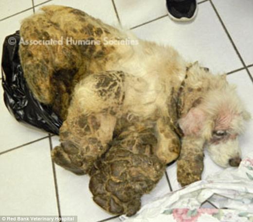Chú chó bị bỏ rơi trong thùng rác chỉ vì người chủ cảm thấy không thích nuôi nữa.