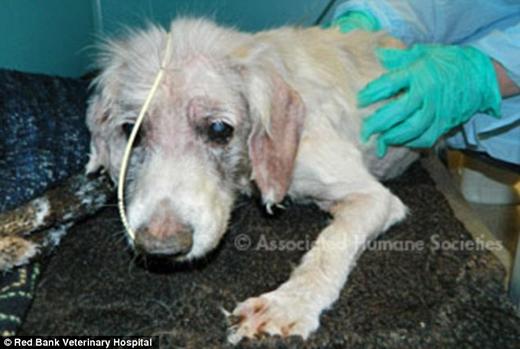 Rơi nước mắt trước cảnh chú chó bị bỏ rơi với đôi chân voi