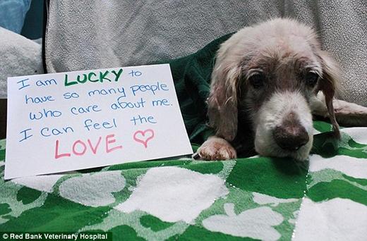 Mọi người trên thế giới hằng ngày gửi lời hỏi thăm đến chú chó 13 tuổi này.