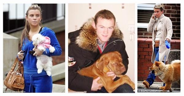 Vợ chồng nhà Rooney cũng rất thích nuôi chó. (Ảnh: internet)