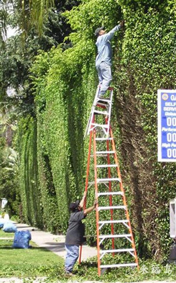 Thang to thang nhỏ đều vô cùng hữu dụng với những người có nhu cầu trèo cao.