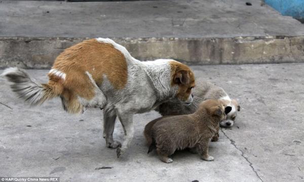 Bị chủ vứt bỏ, xe lửa cán nát hai chân, chú chó này sống sót thế nào?