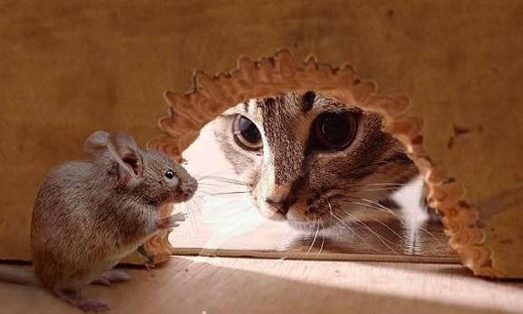 9. Con chuột nào chẳng hề sợ mèo, sợ chó?(Ảnh Internet)