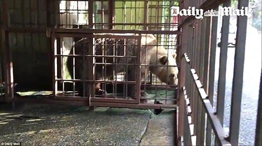 Tomi bị nhốt trong một chiếc chuồng nhỏ xíu, lại còn không có nước sạch để uống và cũng không đượcăn uống tử tếmà phải tự đi xin của thực khách.
