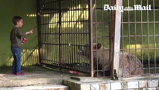 Tuyệt vọng vì bị nhốt một mình trong chuồng, chú gấu tự nhai chân mình