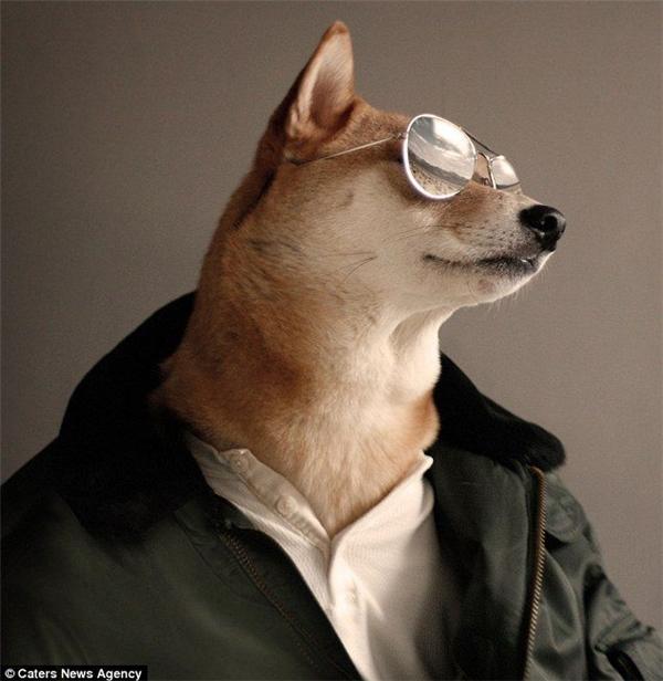 Người mẫu cún thanh lịch này có cát - sê vượt cả David Beckham