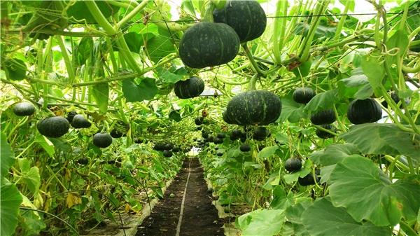 Đã mắt với những vườn trái cây trĩu quả chỉ có trong xứ sở thần tiên