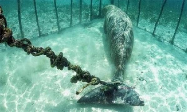 Sau xiếc thú tàn nhẫn, đến cá cảnh đại dương chịu tội