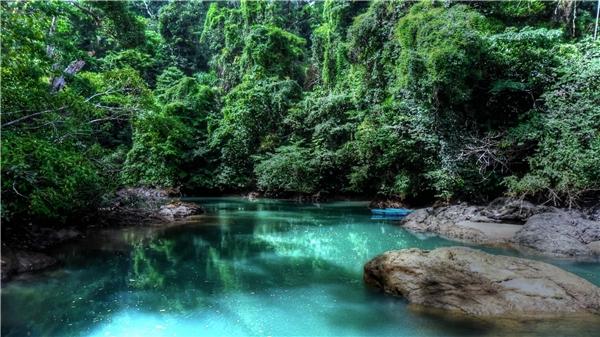 Cánh rừng nhiệt đới đầy hương sắc tại Costa Rica.