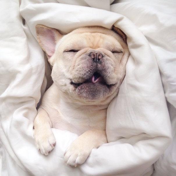 """Khi ngủ, chú chó Milo vẫn trông rất """"dễ ghét""""."""