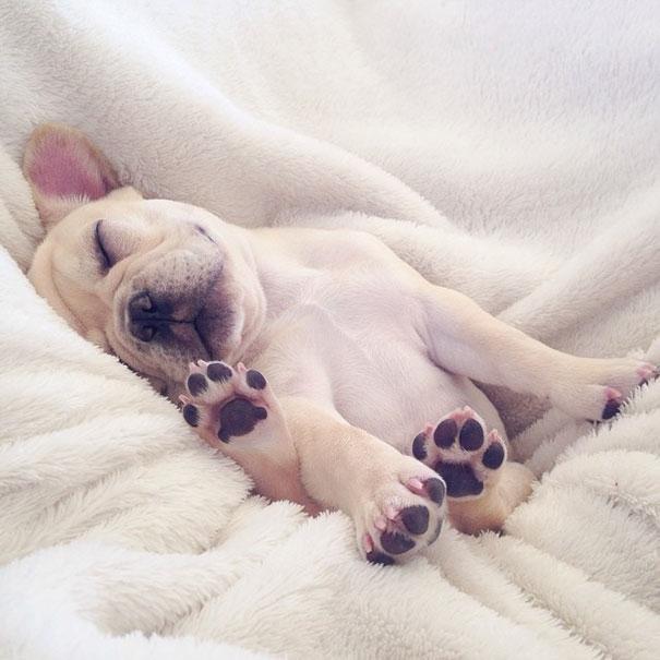 Thôi mệt rồi, nghỉ diễn!