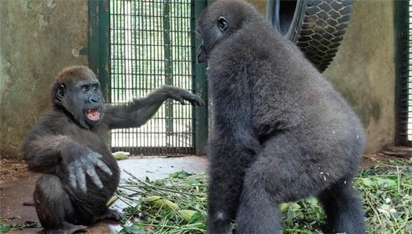 Xúc động với hành động của 2 chú khỉ cô độc ngay lần đầu gặp mặt