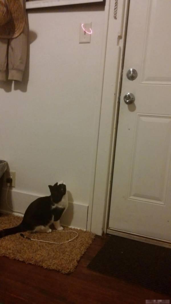 Mèo cưng hóa ra cũng có tác dụng tắt đèn, nếu biết kết hợp tốt với bút laser.