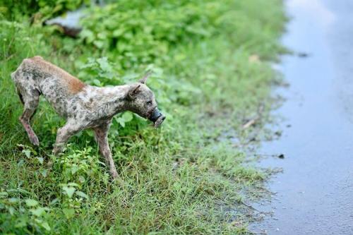 Chú chó bị quấn băng keo hoại tử mõm gây chấn động bây giờ ra sao?