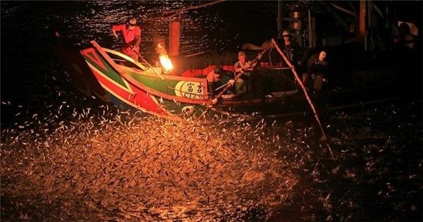 Được thu hút bởi ánh đèn sáng, đàn cá lũ lượt kéo đến.