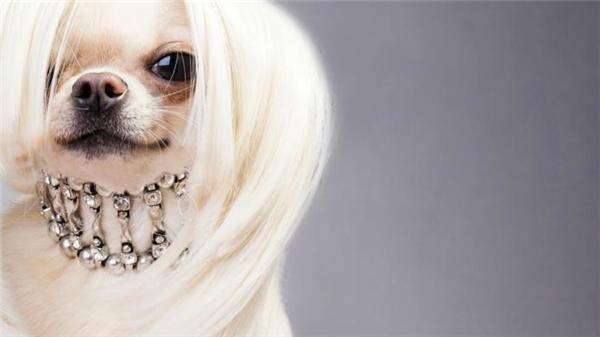 Không biết cô ấy dùng gì mà mái tóc suôn mềm óng ả đến thế.