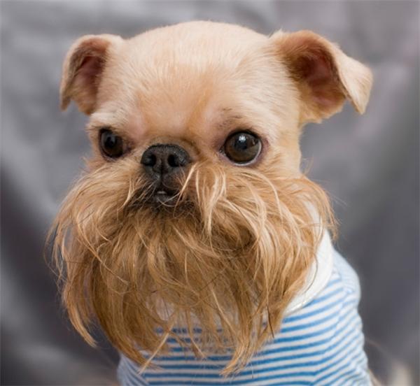 Bộ râu sang chảnh nhất thời đại.