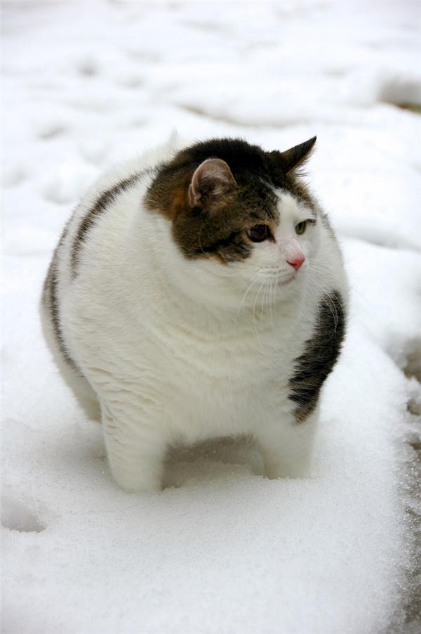 """""""Mèo ơi sao thân mèo tròn thế?"""""""