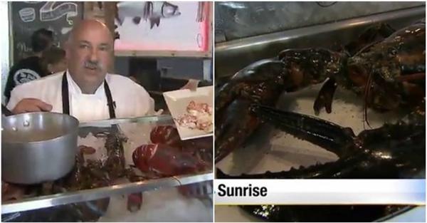 Xúc động cuộc giải cứu cụ tôm hùm 110 tuổi nặng 7kg về biển khơi