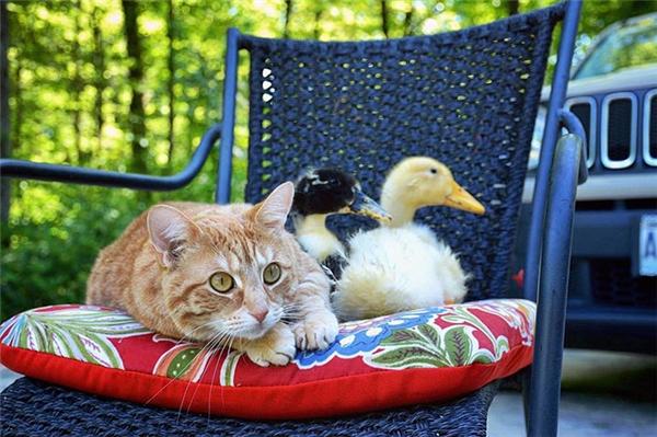 chó mèo sống hòa thuận