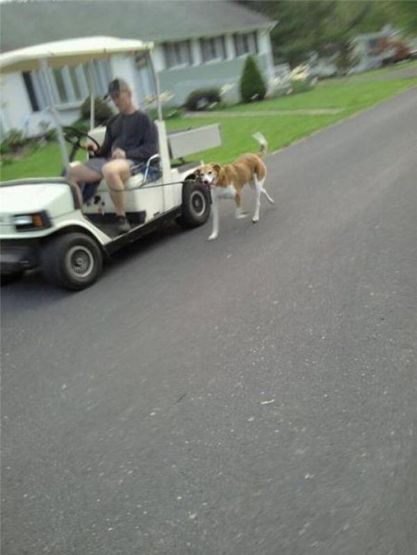 Khi chó nó muốn đi dạo mà chủ thì không.