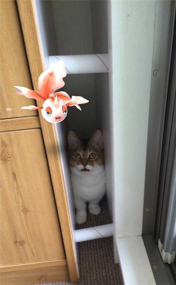 Truyền thuyết kể lại rằng thú cưng có thể nhìn thấy Pokemon