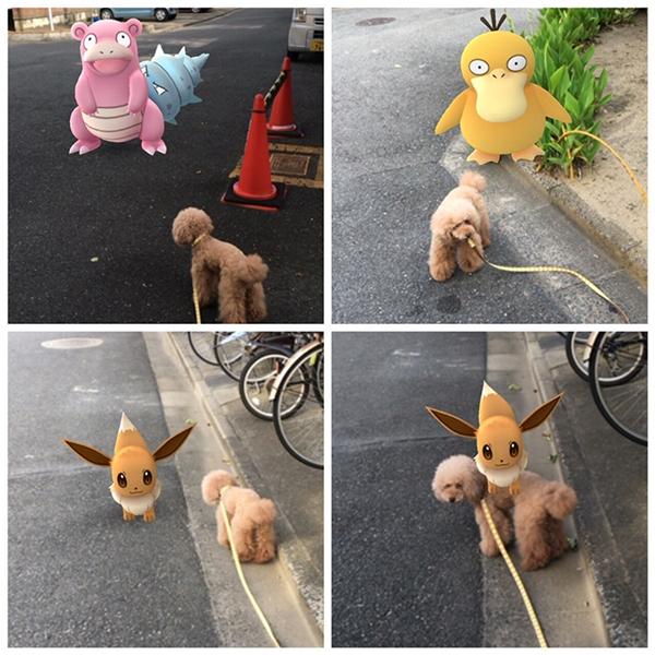 """Em Poodle dễ cưng này gặp biết bao Pokemon nhưng rốt cuộc chỉ thích em cáo xinh xắn này thôi, lại còn... """"cõng"""" người ta về dinh nữa chứ."""