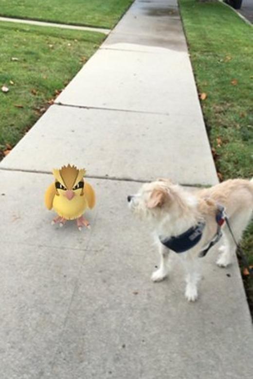 Con chim kia, mau mau chịu trói để ta còn đi dạo tiếp.