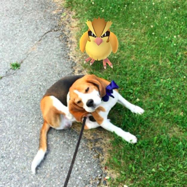 Tranh thủ lúc ta gãi tai thì hãy mau bắt con chim ấy đi.