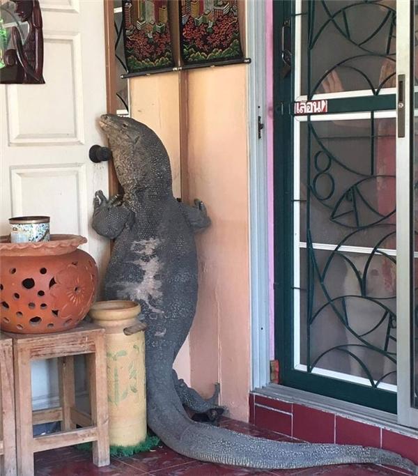 """Đáng tiếc là câu chuyện chỉ dừng lại ở đó và cho đến nay vẫn không ai biết con vật đã bị """"tóm cổ"""" như thế nào."""