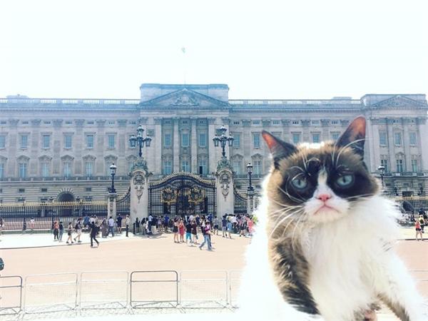 Cung điện Buckingham nghe cũng nổi tiếng lắm mà nhìn giống cái chợ vậy.