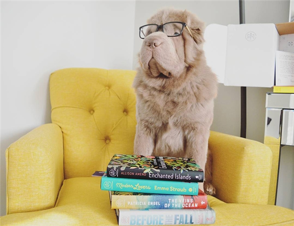Đặc biệt là trong thời gian gần đây, Tonkey rất say mê đọc sách, đến nỗi phải đeo cả kính rồi này.