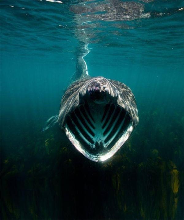 Các thợ lặn sợ nhất là nhữngloài vậtvừa to vừa sẵn sàng chiến đấu như thế này đây.