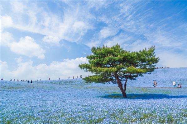 Đồng xanh tại Nhật Bản.