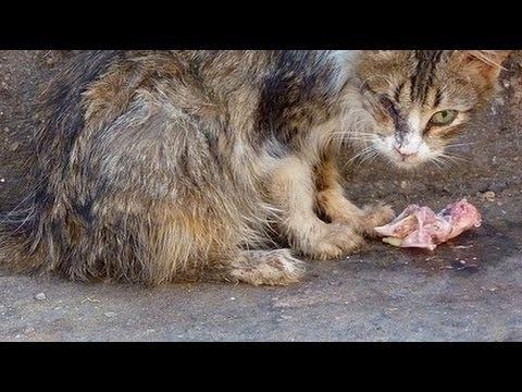 """Xấu Xí là một con mèo """"giang hồ"""" sống trong khu của tôi...(Ảnh minh họa - Nguồn: Internet)"""