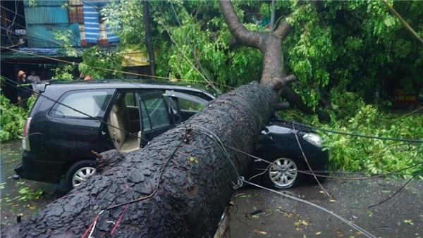 Gió giật mạnh khiến hàng trăm cây đổ ngã khắp thành phố.(Ảnh: Hoàng Giang Huy)