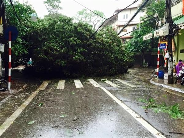 Cây đổ ngã ở phố Hàng Bún (Ảnh: Phạm Hồng Thái)
