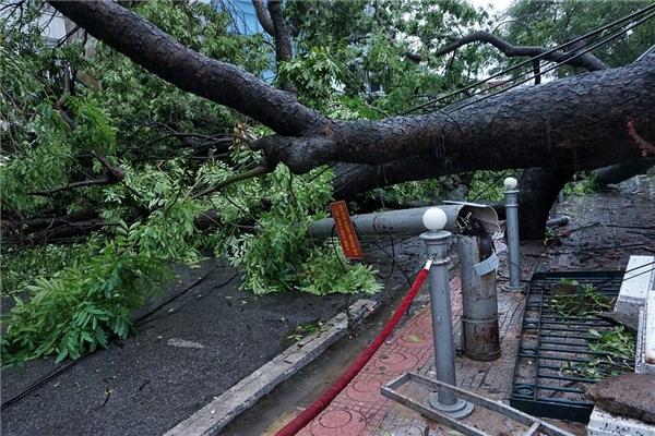 Mưa bão ở Hà Nội: 5 người bị thương, 1 người chết