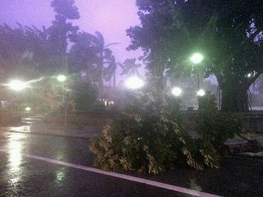 Nhiều cây ngã la liệt trên các tuyến đường ở Thái Bình.