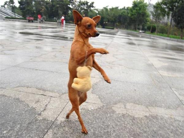 Siêu mẫu Thị Cún đang duyên dáng bước đi trên sàn catwalk giới thiệu bộ sưu tập thú bông xuân hè.