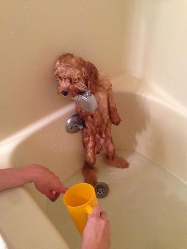 Người ta đã không thích tắm mà cứ bắt tắm là sao.