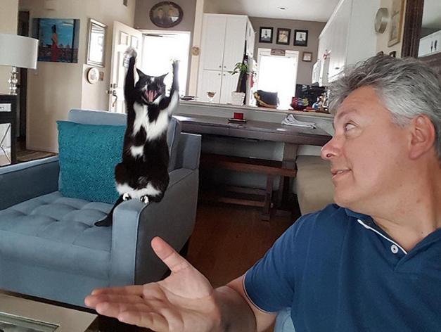 Hành động kì lạ, chú mèo trở thành nạn nhân của các thánh photoshop