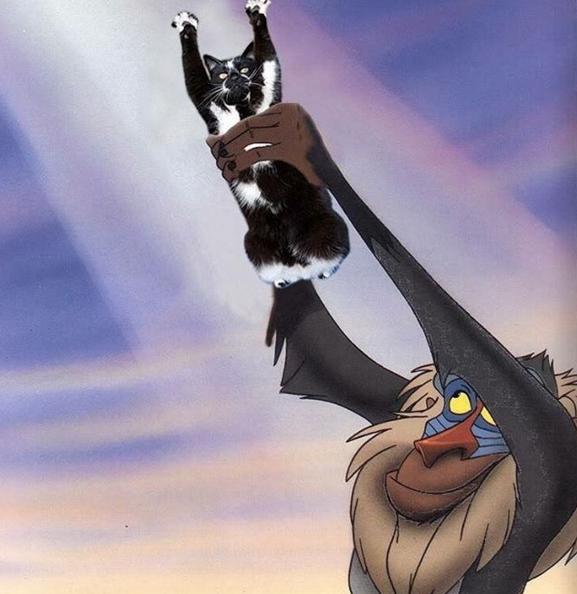 Úi, sao tự nhiên lại rơi vào tay Simba rồi?
