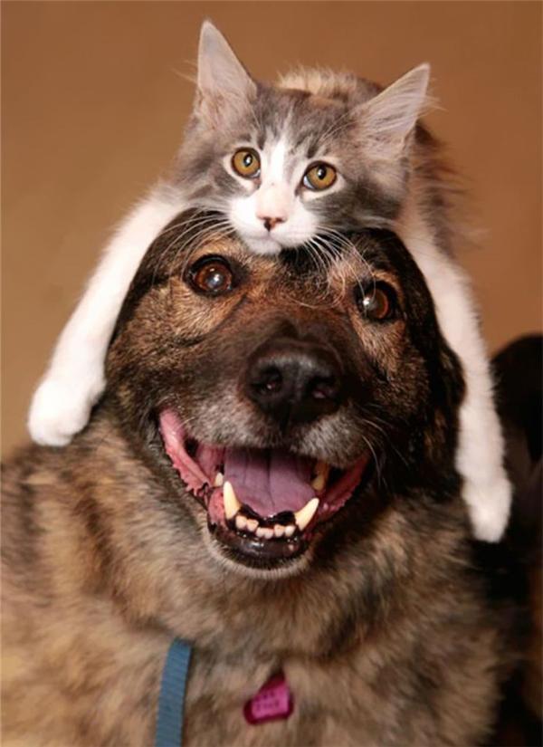 17. Mũ mèo ai ai cũng yêu thích.